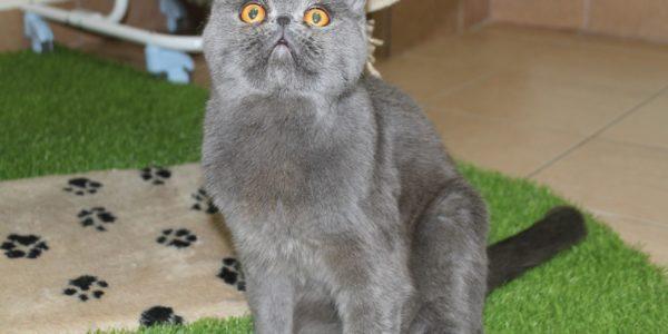 Позитивный кот Вася