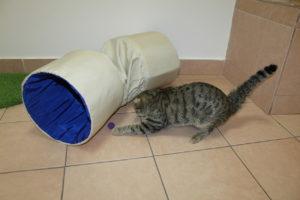 отдать кошку на передержку в Санкт-Петербурге