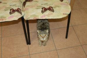 гостиница для кошек в спб