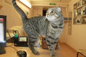 передержка котов в спб