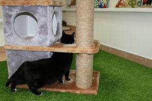 недорогая гостиница для кошек в спб